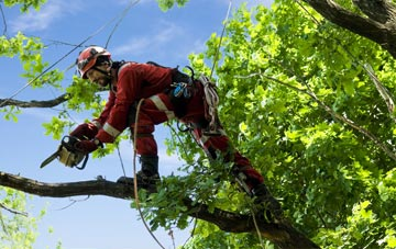 find trusted rated Newmiln tree surgeons in Perth And Kinross