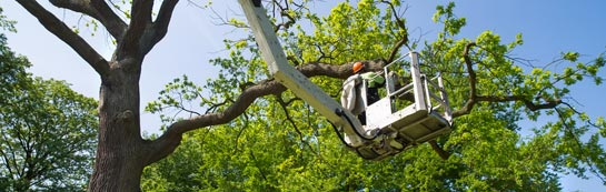 Newmiln tree surgery services