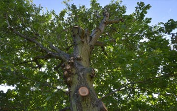 what is Newmiln tree surgery?